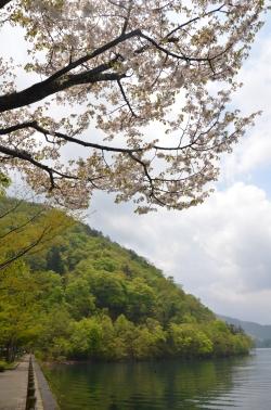 3.Chuzenji-tó6 sakura