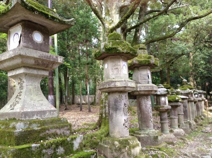 4.Nara park13