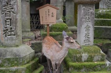 4.Nara park3